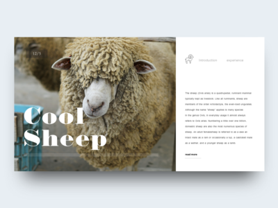 Sheep zoo sheep