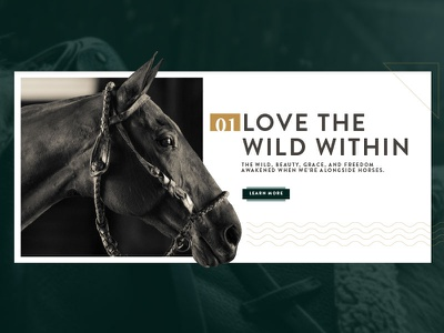 Love the wild wild digital website web ui ux model polo stable animals horse