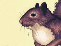 Squirrelin around