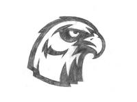 Hawk Sketch