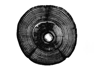 Tree Rings Eye - Eye 69