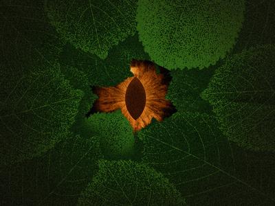 Jungle Eye - Eye 84