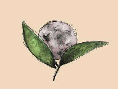 Moon Flower illustration sketch botanical illustration botanical moon moon illustration watercolor