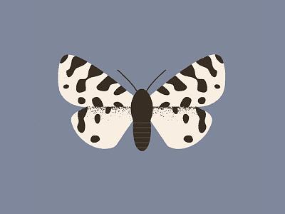 Moth (ocnogyna zoraida) design illustration butterfly hawkmoth moth