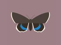 Moth (catocala fraxini)
