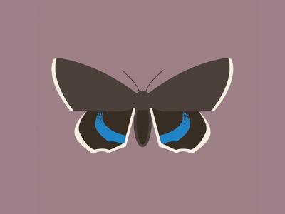 Moth (catocala fraxini) design illustration butterfly hawkmoth moth