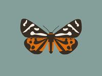 Moth (parasemia plantaginis)