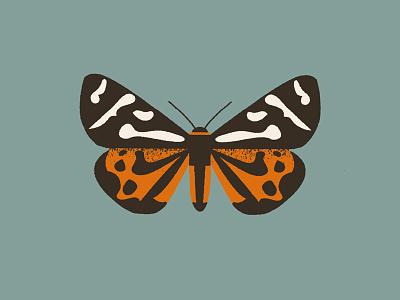 Moth (parasemia plantaginis) design illustration butterfly hawkmoth moth