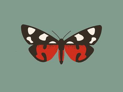 Moth (callimorpha dominula) design illustration butterfly hawkmoth moth
