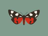Moth (callimorpha dominula)