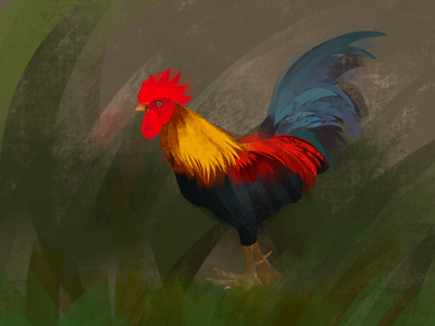 Rooster procreate illustraion rooster