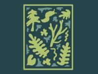 PNW Forest Floor