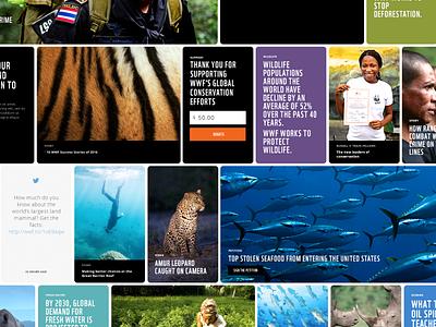 WWF Cards wildlife conservation world wildlife fund pinterest design layout cards story wwf