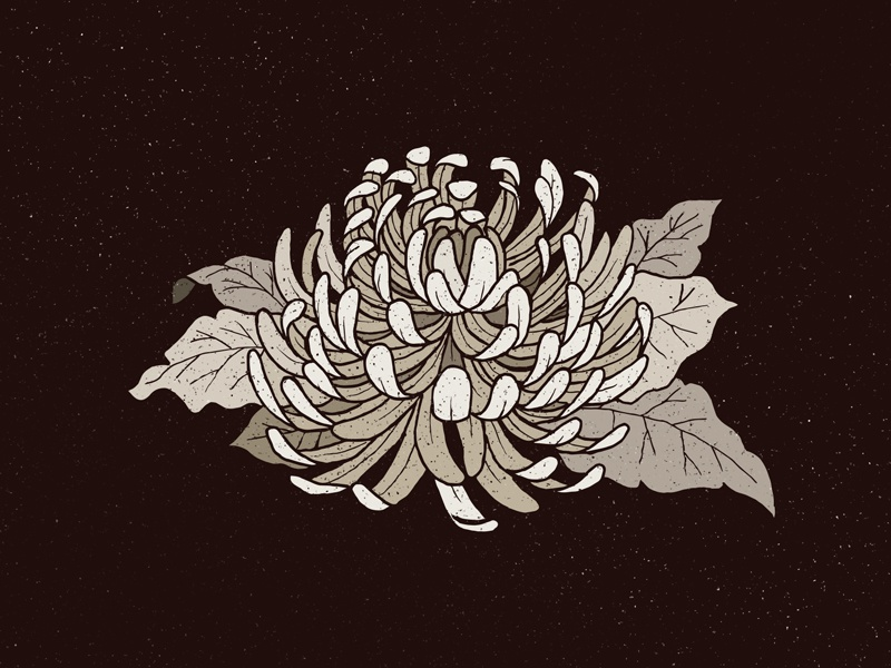 Chrysanthemum drawing illustration flower power weird creepy dark texture sad grunge flower chrysanthemum