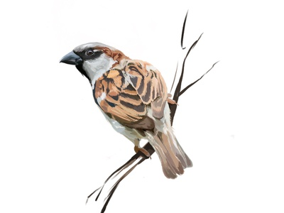 Little sparrow bird bird illustration sparrow digital art digital illustration digital painting procreate graphic design animal art animal illustration illustrator illustration design illustration