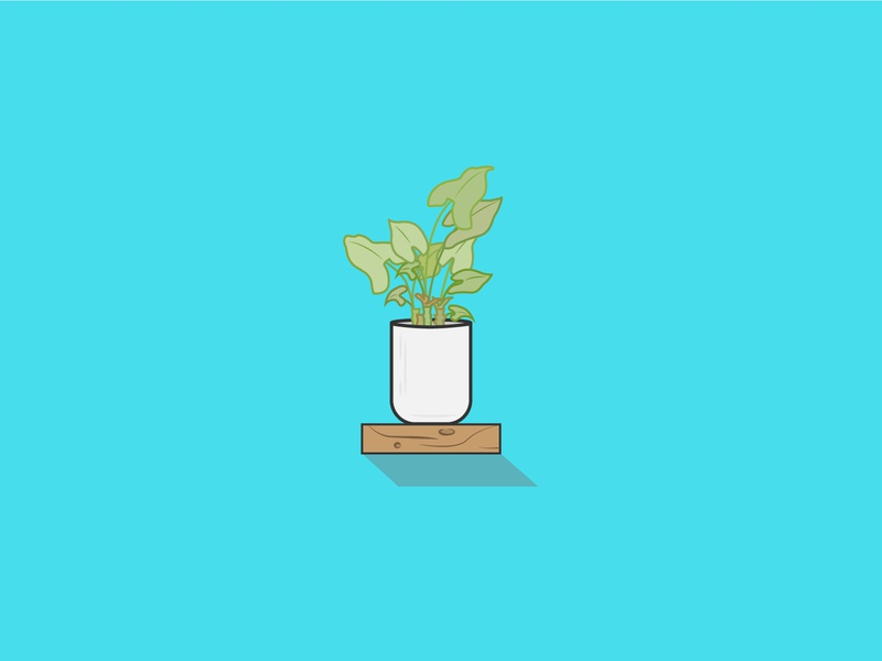 House Plant vector illustration icon design
