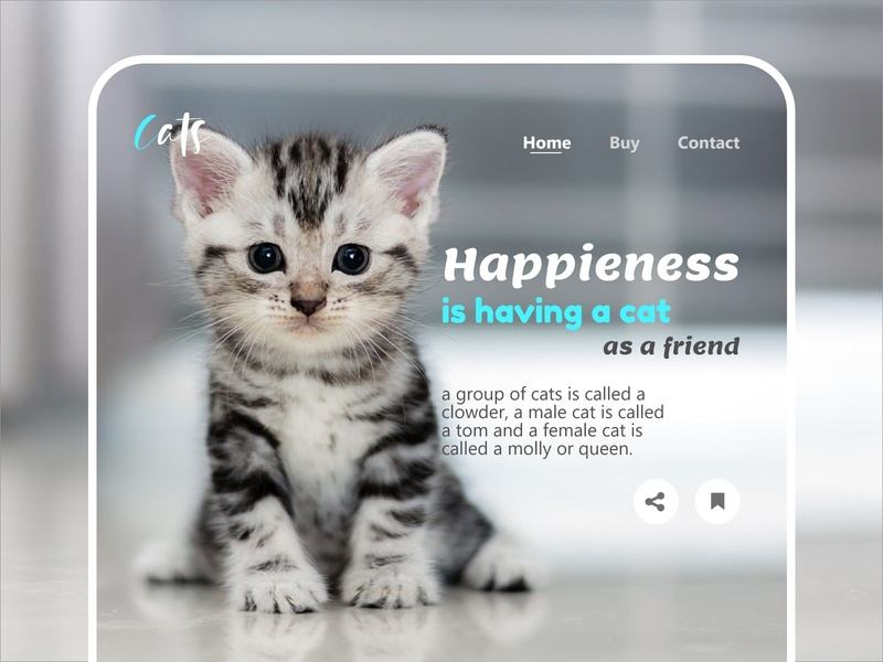 Home Cats design new concept modern ui website ui web webdesign website cats web cats