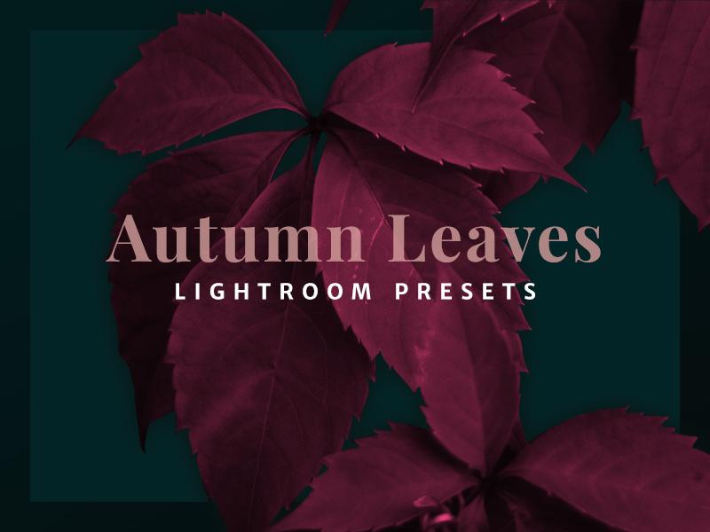 Autumn leaves lightroom presets