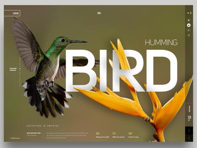 Humming Bird UI