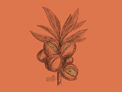 - Almond ipadpro pencil illustrator design illustration
