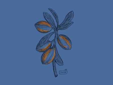 - Argan ipadpro pencil illustrator design illustration