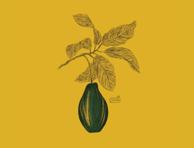 - Avocado color pencil ipadpro illustration illustrator design