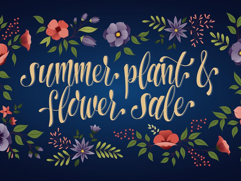 Summer Plant & Flower Sale Promo leaves sale bloom nature flower plant lettering illustration typography type hand-drawn hand-lettering