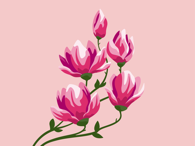 Magnolia vector magnolia botanical illustration plants flowers design graphic vector illustration illustration adobe illustrator