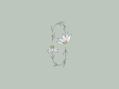 Have a nice daisy! flower illustration botanical flower daisy floral flowers botanical illustration vector icon minimal illustrator design illustration
