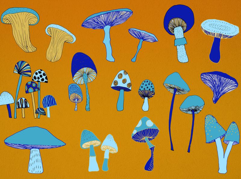 Mushrooms photoshop illustration art illustration hand drawn mushrooms mushroom