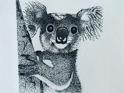 Koala sketch animals illustrated animals koala pen stippling sketchbook art illustrator design illustration artwork drawing