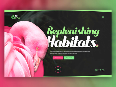 Habitat Rehabiliation UI Concept web design landing page pattern web design interactive interaction loading loader animated flamingo animation ux fyresite uiux dailyui ui
