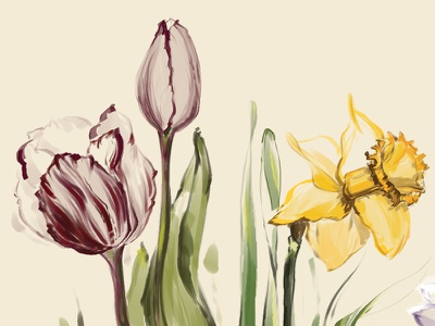 Flowers for this spring spring flower daffodil tulip