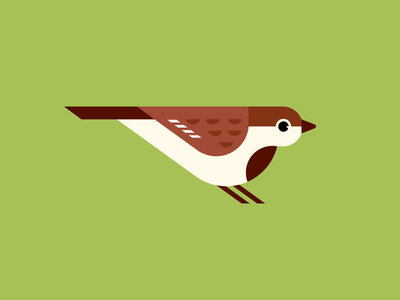 House Sparrow minimal bird bird geometric illustration sparrow house sparrow