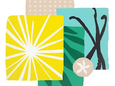 Vanilla sun drink flavor packaging modern texture pattern vanilla plant illustration branding
