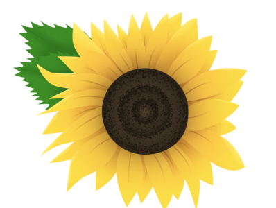 Sunflower bloom summer sunflower flower vector design illustration