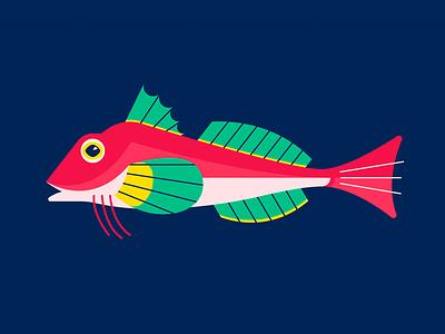 Red Gurnard marine water sea ocean fish gillustrations gillustration