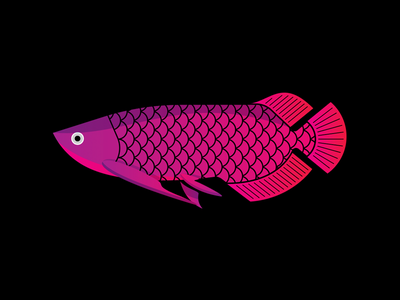 Arowana colorful arowana marine water sea ocean fish gillustrations gillustration