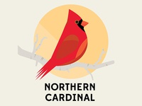 Northern Cardinal - Birds of the Blue Ridge