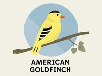 American Goldfinch - Birds of the Blue Ridge