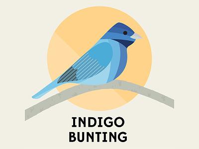 Indigo Bunting - Birds of the Blue Ridge north carolina blue ridge bird art vector indigo bunting blue indigo blue ridge mountains asheville birds