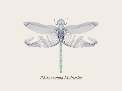 Dragonfly lines illustrator shape builder wire gradient insect animal libellule symetry dragonfly vector illustration