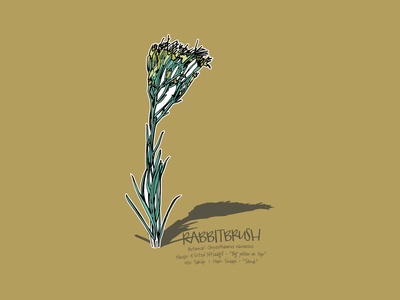 Rabbitbrush Dribbble