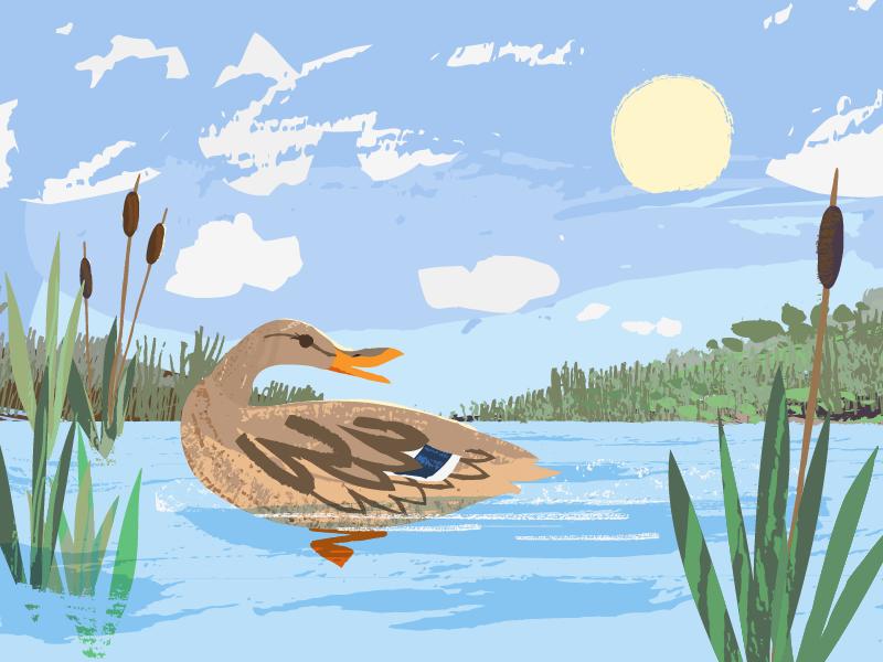 WIP: Mallard-Direction 1 mallard duck clouds painting brushes texture vector