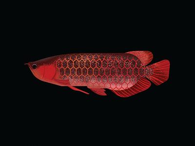 Arowana realism illustration texture vector fish arowana gillustration