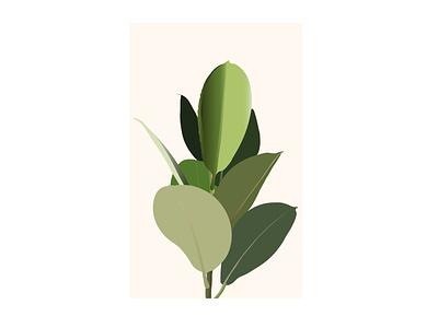 Rubber Plant plant illustration