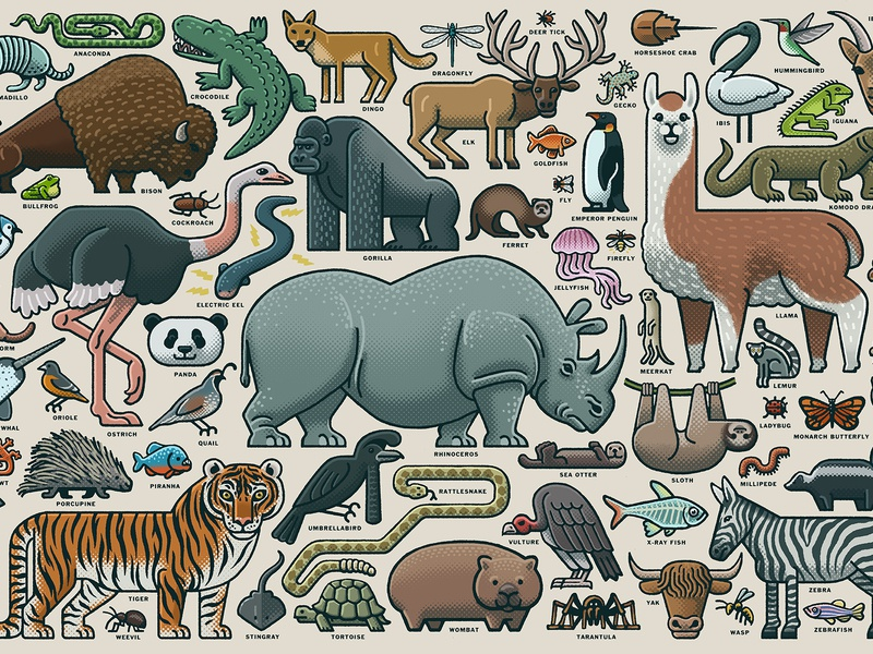 Animal Collage ravensburger licensing jigsaw puzzles puzzle animal illustration animal art animals illustrated animals drawing zucca mario illustration