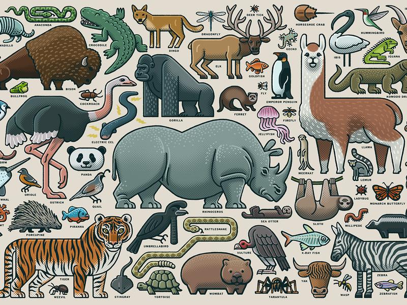 Animal Collage ravensburger licensing jigsaw puzzles puzzle animal illustration animal art animals illustrated animals drawing zucca mario illustration
