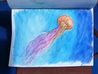 Jellyfish watercolor illustration
