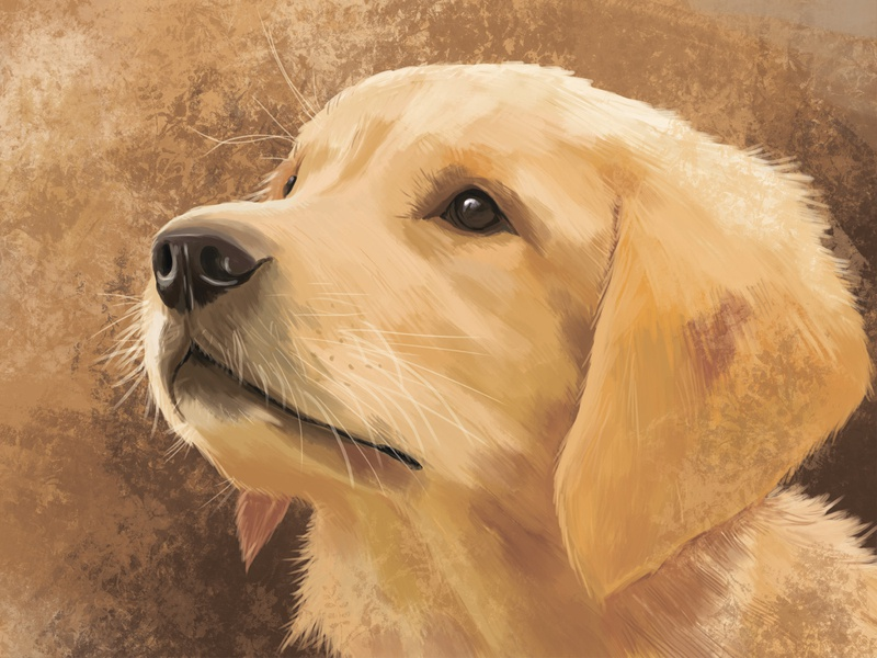 "Illustration on the theme ""Golden retriever"" digital art animal retriever dog drawing digital illustration art"